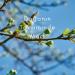 Doğanın Takviminde Mart