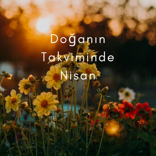 Doğanın Takviminde Nisan