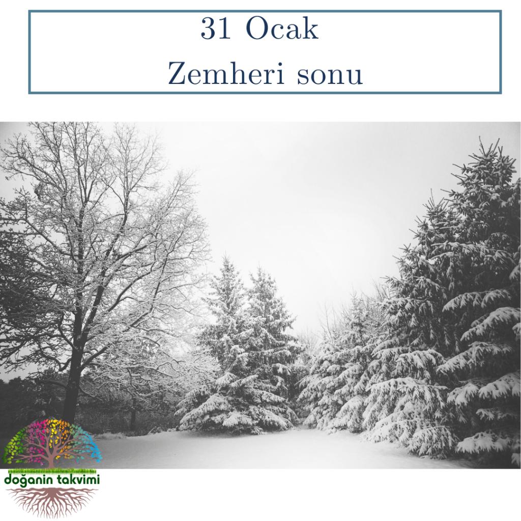 31 Ocak  - Erbain sonu (Zemheri'nin 40 günlük kış dönemi bitişi) - Doğanın Takvimi