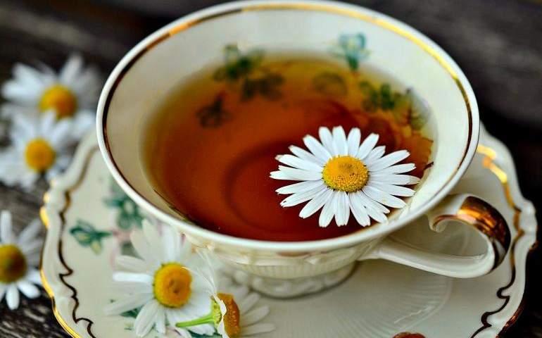 Papayta Çayı - Doğanın Takvimi