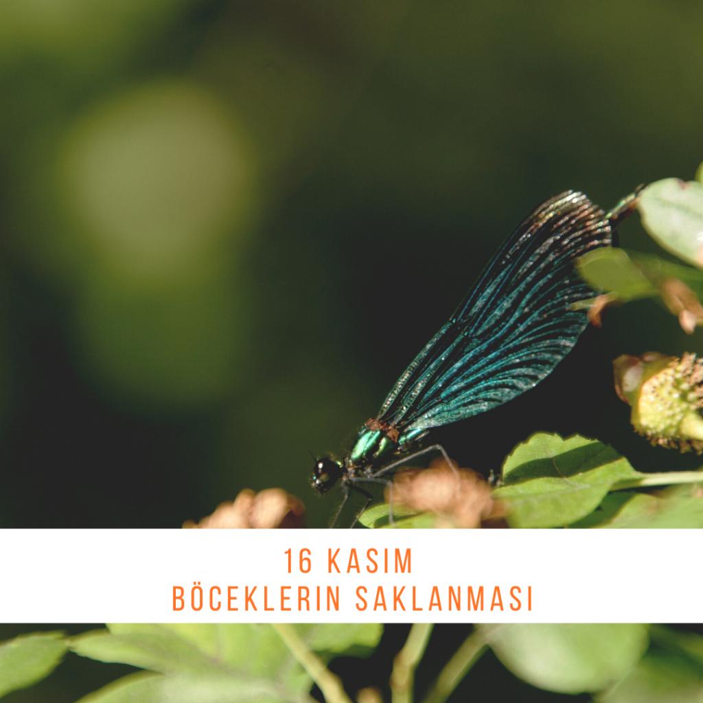 16 Kasım - Böceklerin Saklanması - Doğanın Takvimi