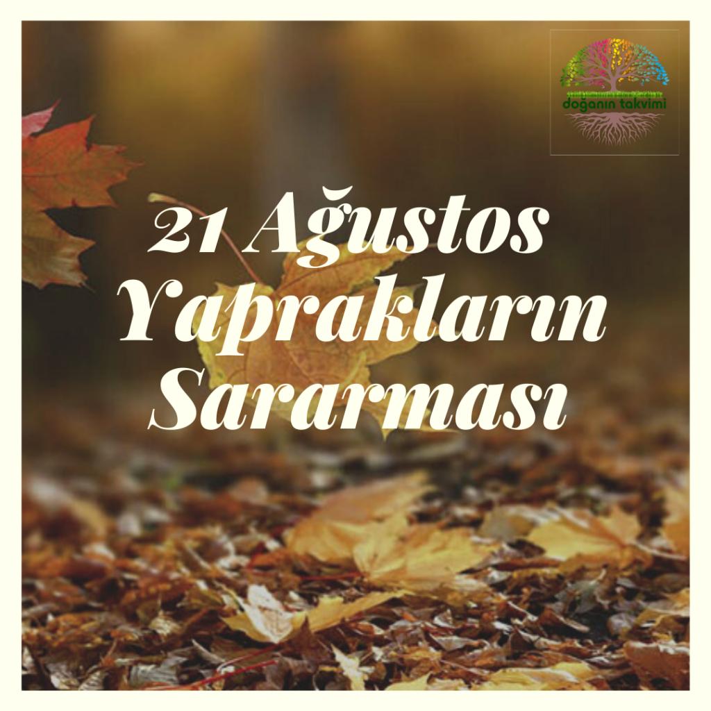 21 Ağustos - Yaprakların Sararması - Doğanın Takvimi