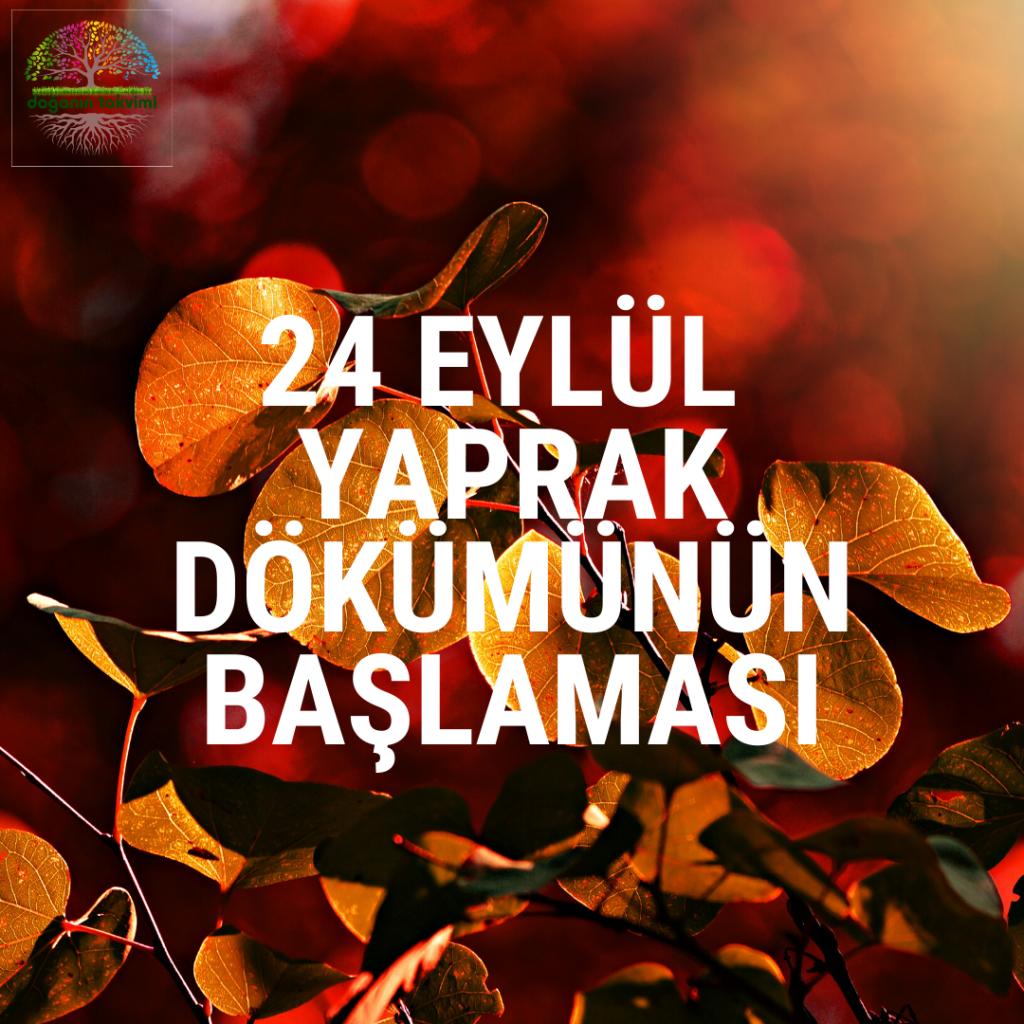 24 Eylül - Yaprak Dökümünün Başlaması - Doğanın Takvimi