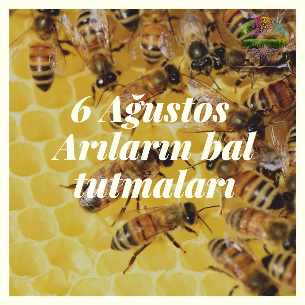 6 Ağustos – Arıların bal tutmaları - Doğanın Takvimi